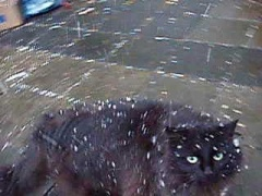 video still: snowy cat