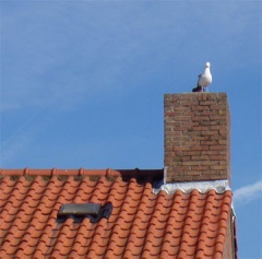 seagull on chimney