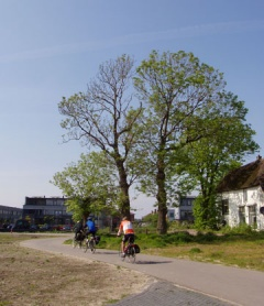 tree and cyclists
