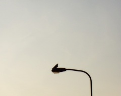 bird on lamppost