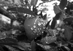 water droplets on leaf 2