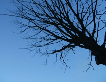 blue tree silhouette