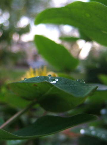 waterdrops on plant leaf