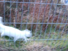 blurry white cat