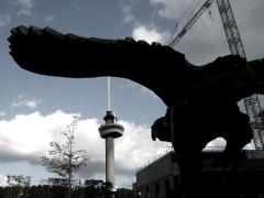 giant bird attacks rotterdam